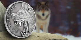 Gray Wolf: First North American Predator Silver Coin Released to Market